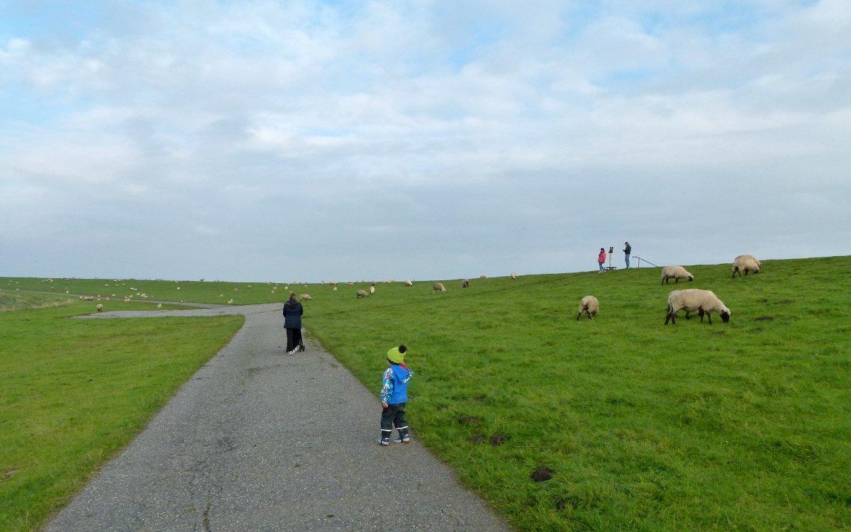 Spaziergänger, Deich und Schafe in der Nähe des Leuchtturm Pilsum
