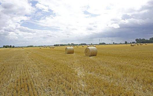 Symbolfoto, da uns kein geeignetes Foto vorlag - Das Bild zeigt Strohballen auf einem Feld in Neuwesteel (Stadt Norden)