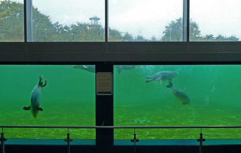 Norddeich: Heuler in der Seehundstation